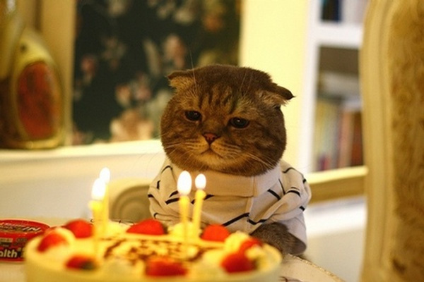 Birthday_cat_sad