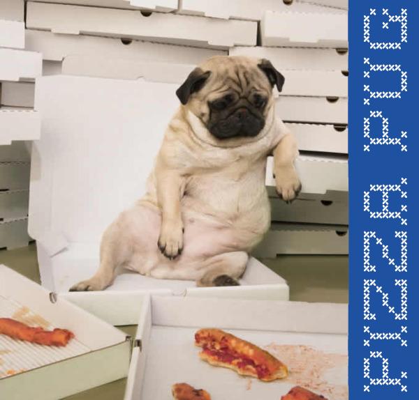 Pizza_pug
