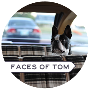 Faces of tom