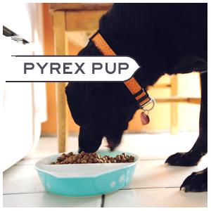 Pyrex pup