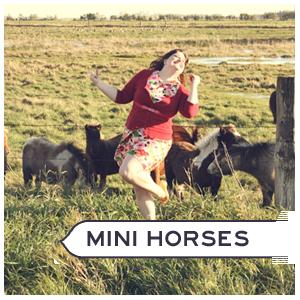 Mini horse farm
