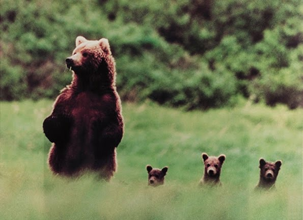 4 bears on pinterest