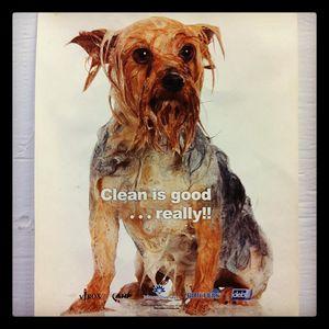 I-cleandog