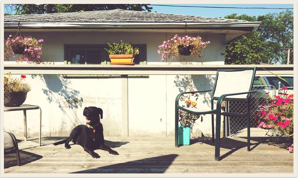 Lola backyard