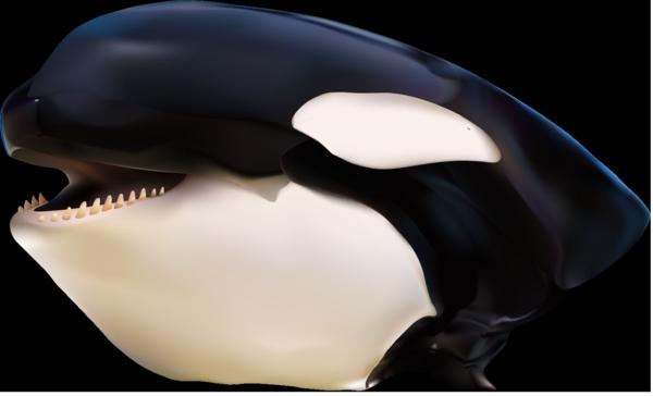 Orca Gradient 2